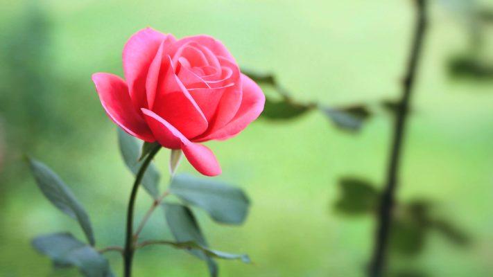 Những diễn đàn đẹp như bông hoa